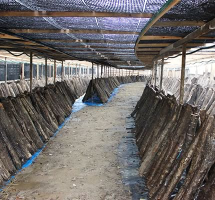 椎茸栽培場の写真